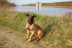 Hund-Aragon-22