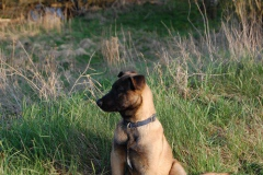 Hund-Aragon-23-rotated