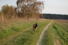 Hund-Aragon-24