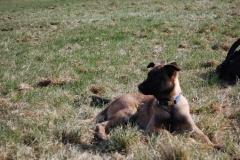 Hund-Aragon-4